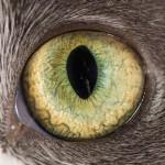 Macro Shots Of Cat Eyes