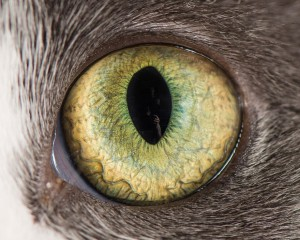 Macro Shots Of Cat Eyes