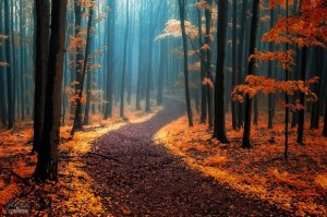 Dream-Like Autumn Forests