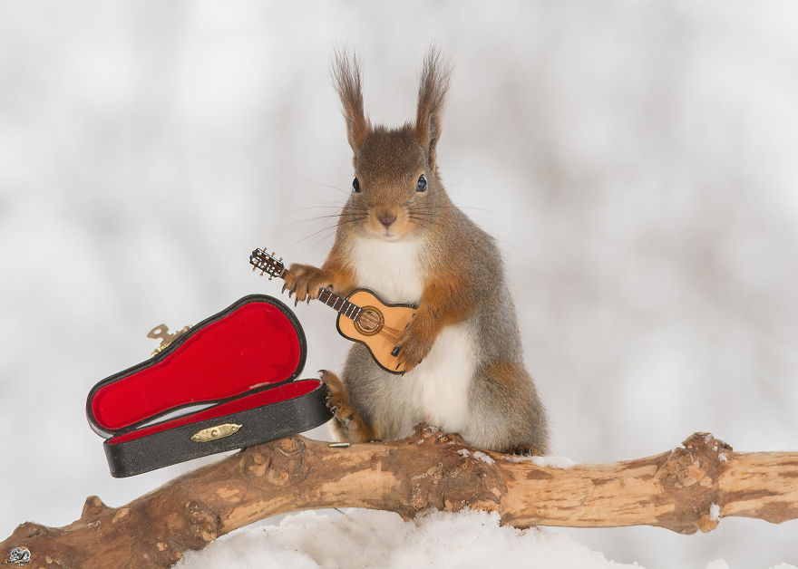 Squirrels With Tiny Musical Instruments