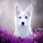 dog-photography-alicja-zmyslowska