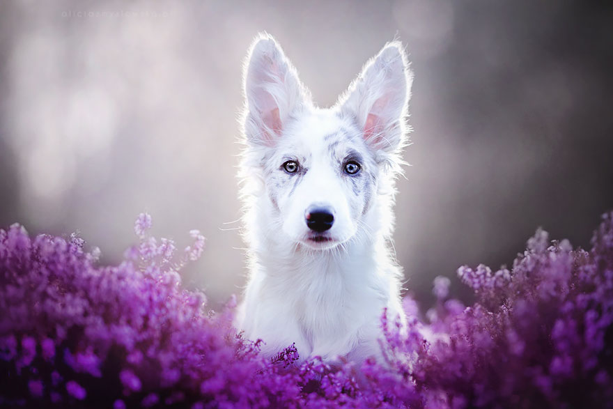 Polish Photographer Takes Beautiful Dog Photos