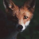 wild-animal-photography-ev36com
