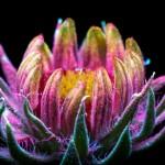 glow-flowers-ev36