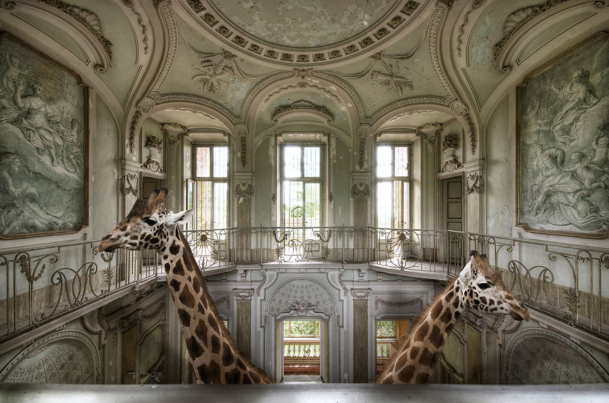Animals And Abandoned Places Make Surreal Images