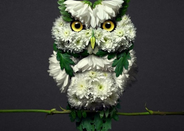 30 Delicate Animal Portraits Created From Things Found In Nature