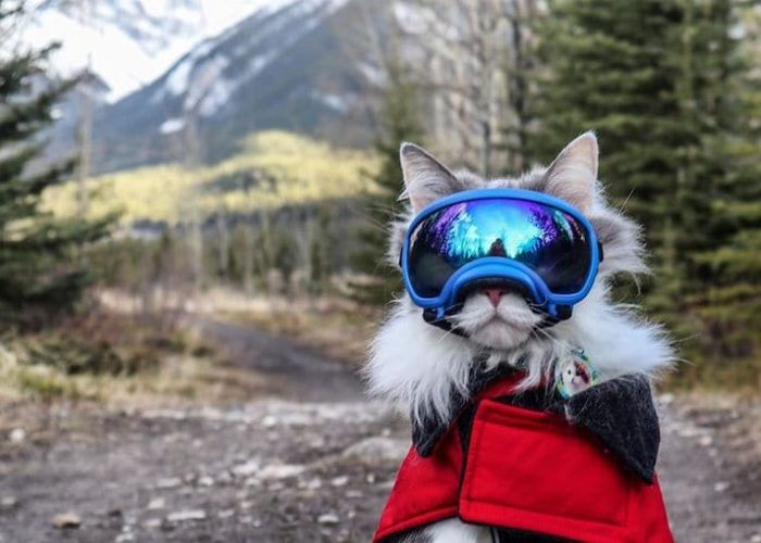 Meet Gary, the Hiking Rescue Cat Who Goes on Pawsome Mountain Adventures