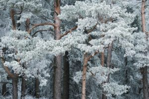 Winter Magic in Real Life: Beautiful Photos of Snow-Covered Forests