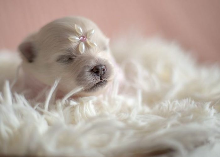 Cutest Photoshoot With Newborn Pups